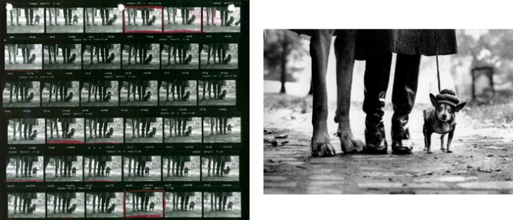 elliotterwitt_contact_image.jpg